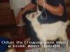 odun_11-300x225